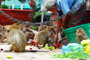 thailandia lopburi tempio delle scimmie