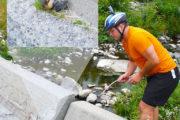norvegia salvataggio lemmings seljord