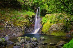 Walking Tour _Levad do Ribeiro Frio Madeira Portogallo cosa vedere e fare