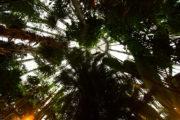 cosa-vedere-a-copenhagen-in-3-giorni-orto-botanico (7)