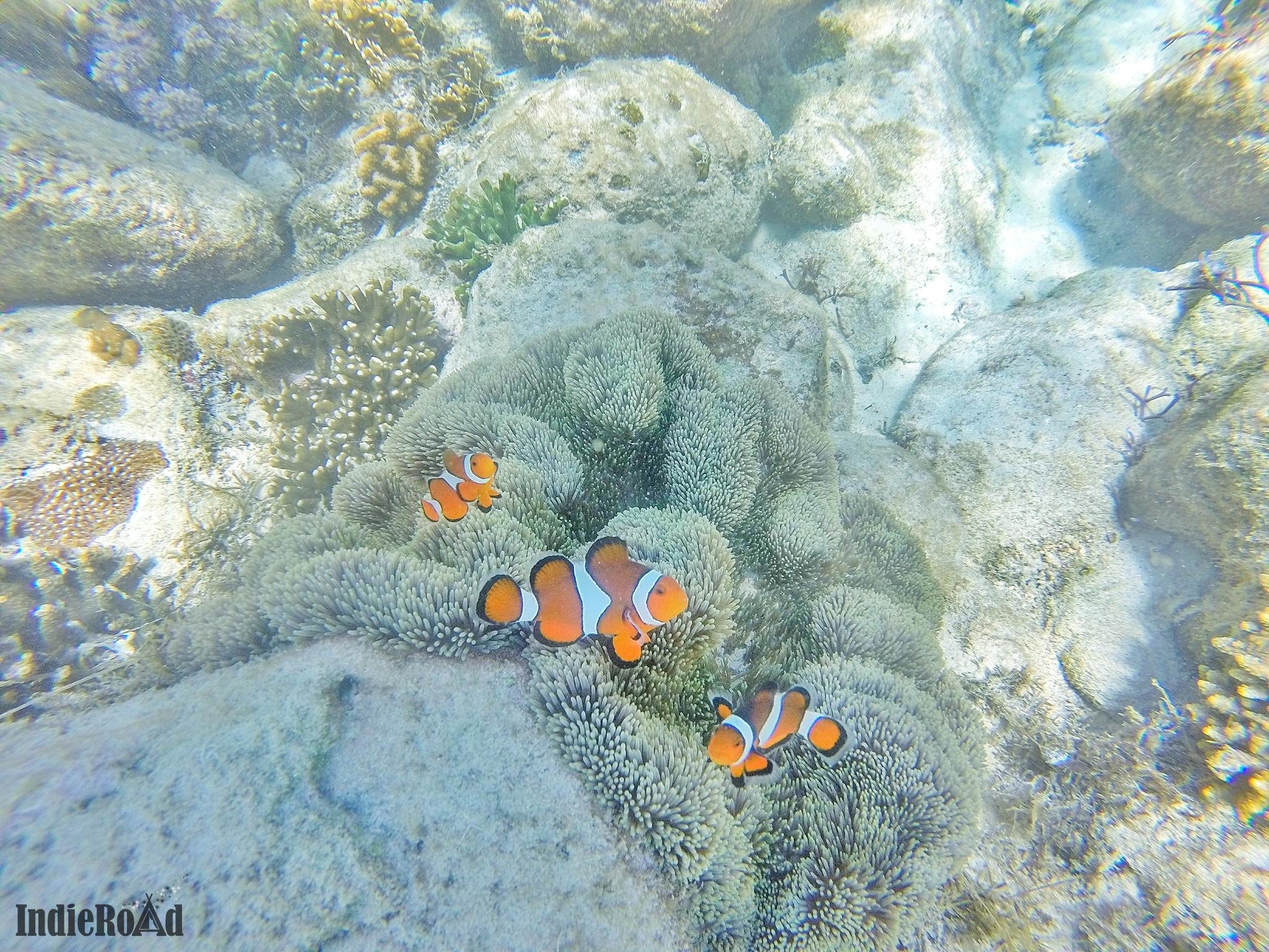 apo island filippine snorkeling tartarughe cosa vedere dove dormire (8)