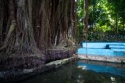 cosa vedere a siquijor filippine old balete tree (3)